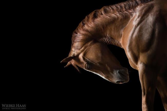 elegance of horses 2