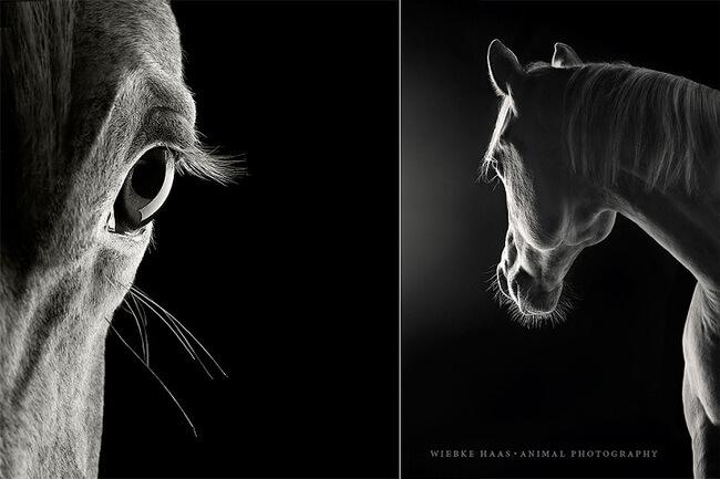 elegance of horses 3