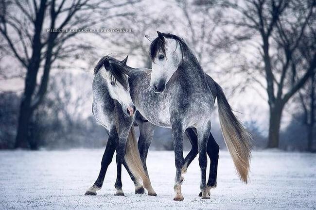 elegance of horses 7