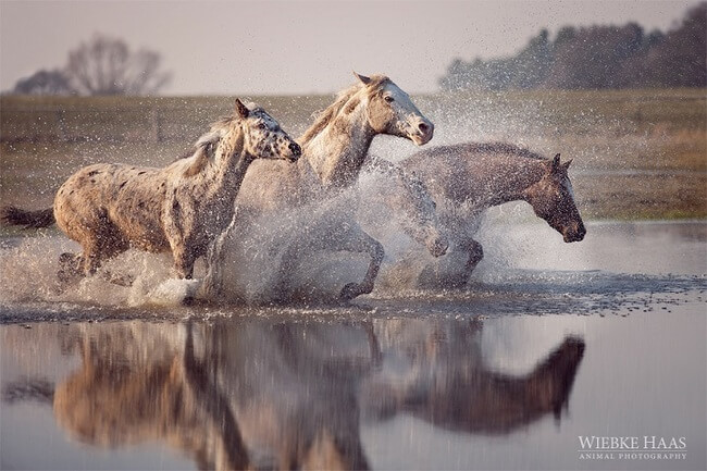 elegance of horses 9