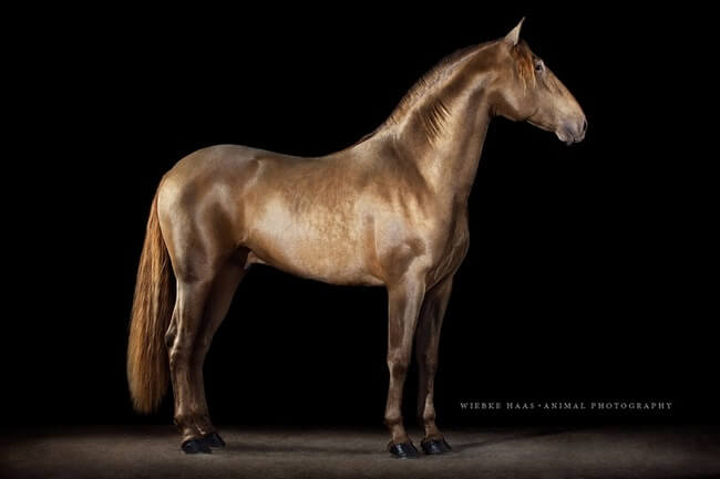 elegance of horses 11