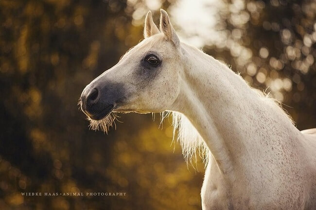 elegance of horses 10