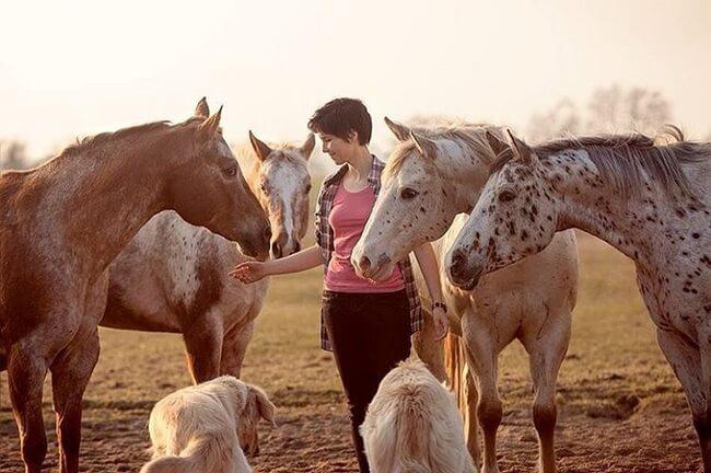 elegance of horses 17