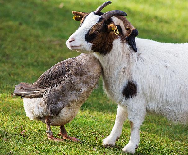 happy-animal-facts-30