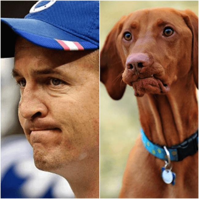 dog look like peyton 11