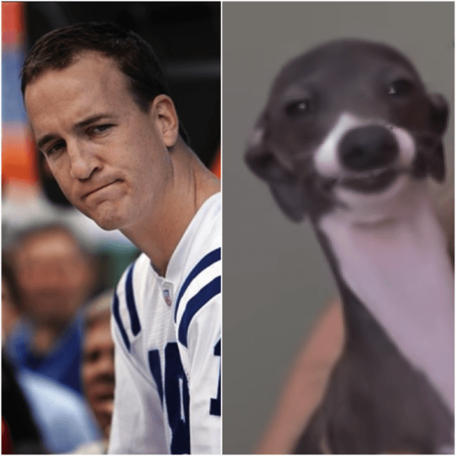 dogs look like peyton 6