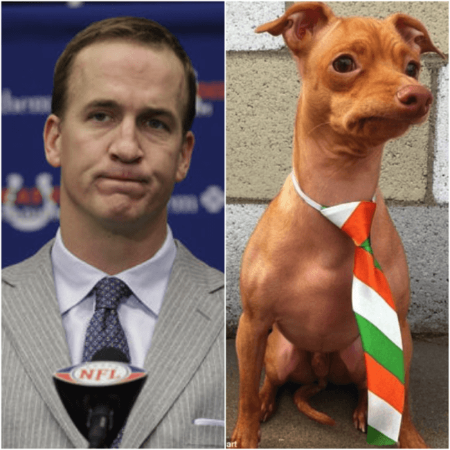 dog look like peyton 14