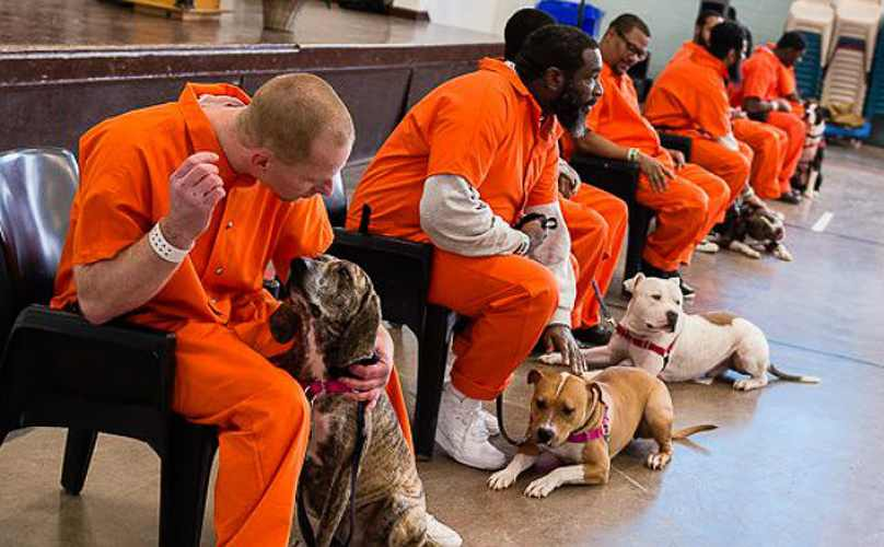 prison_dogs