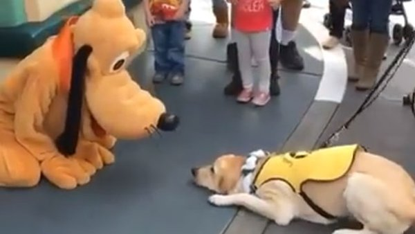 service dogs reaction