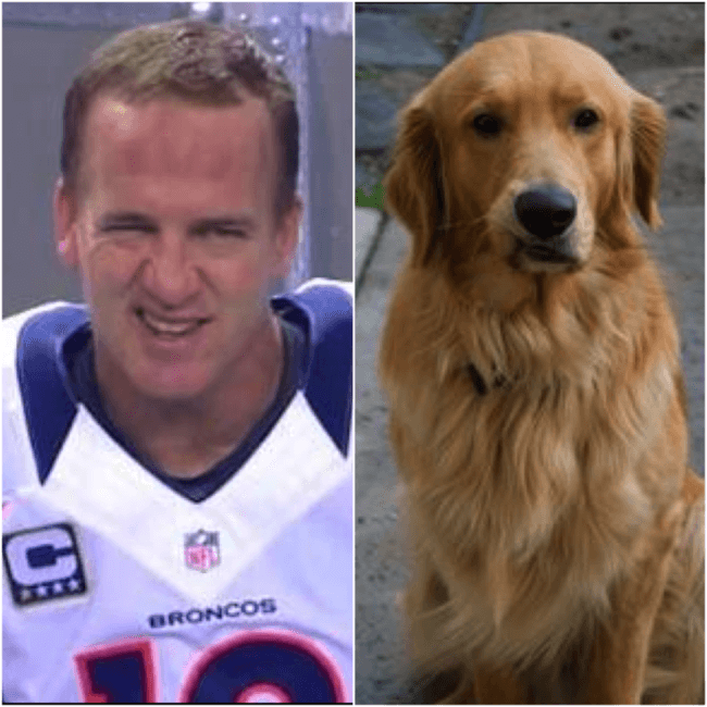 dogs look like peyton 2