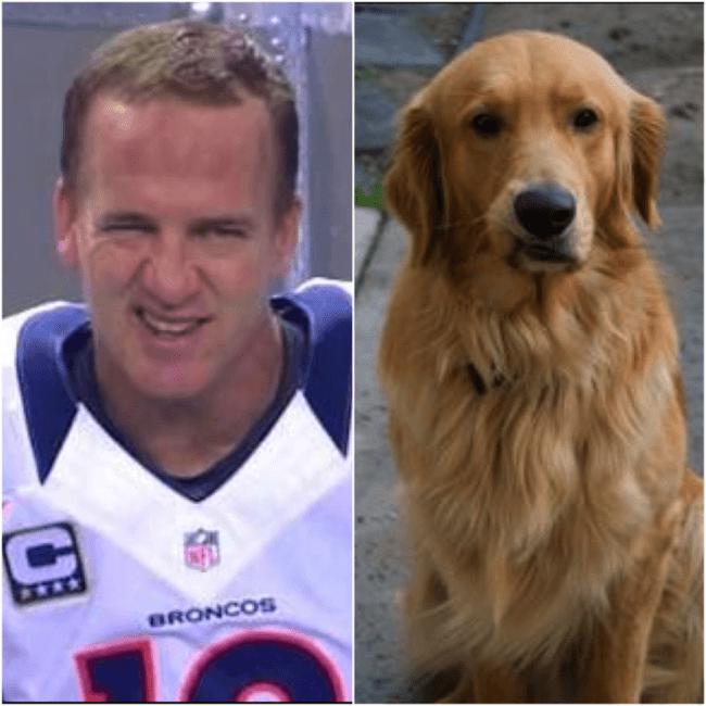 peyton manning dog