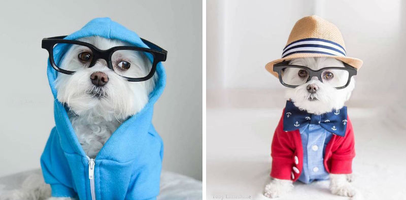 toby hipster dog feat