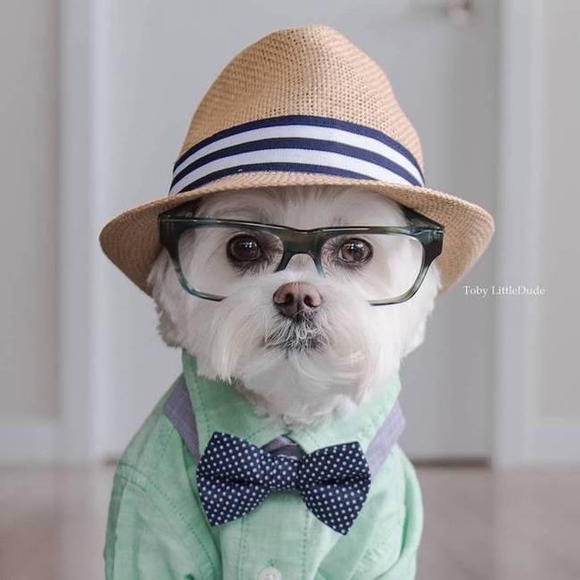 hipster dog 1