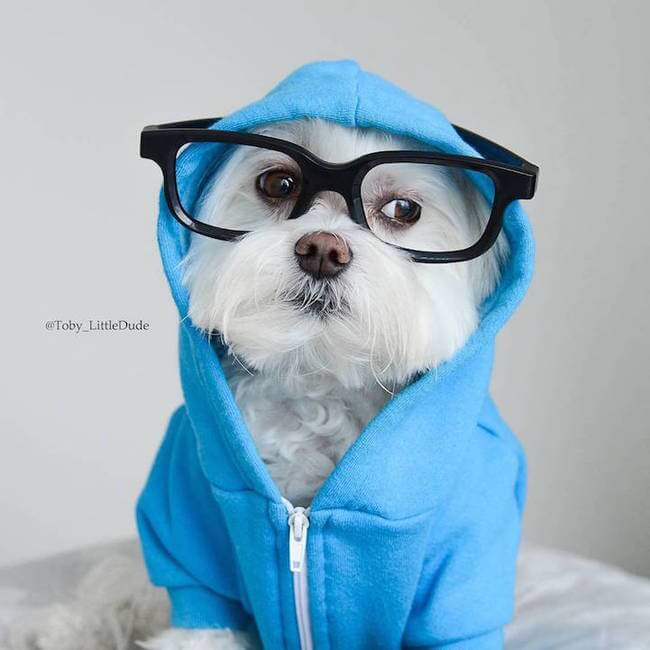 toby hipsters dog 9