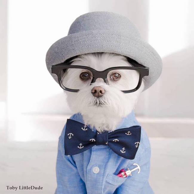 hipster dog 5