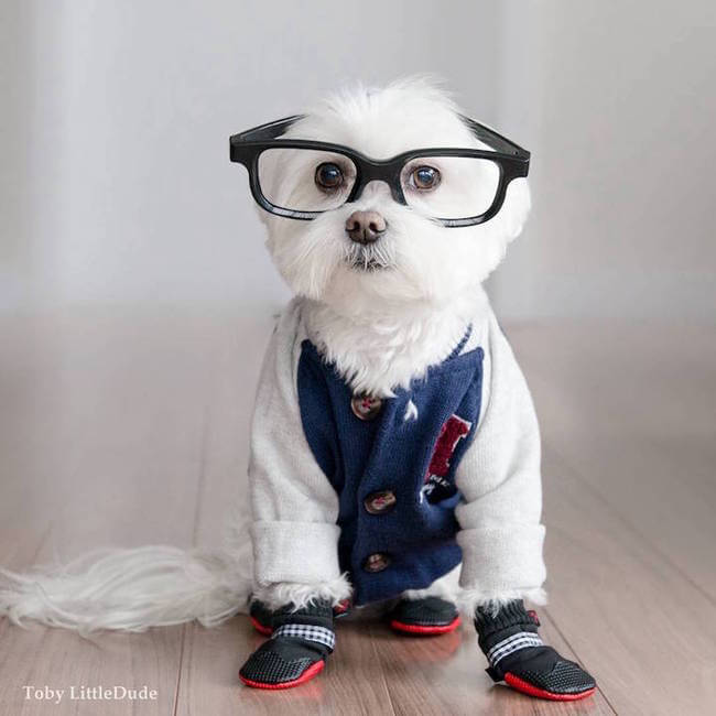 toby hipsters dog 8