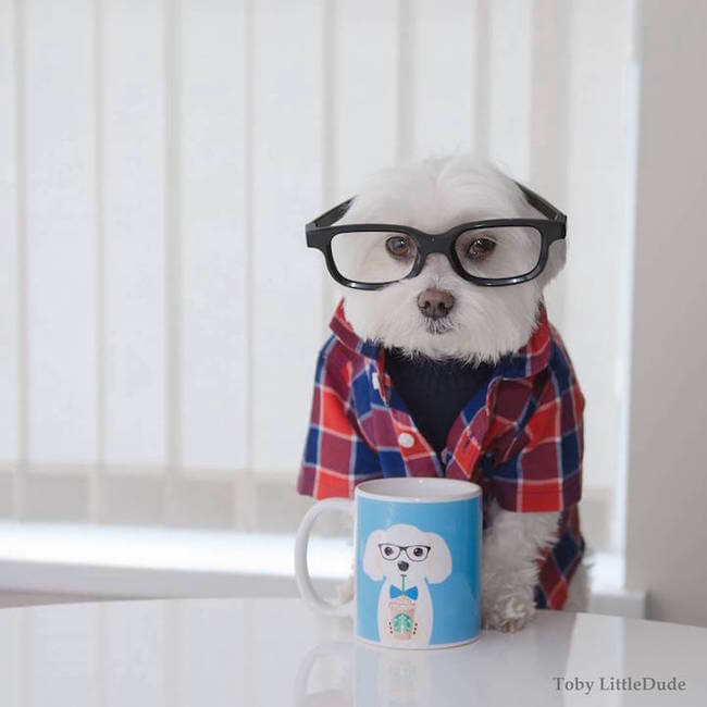 toby hipsters dog 11