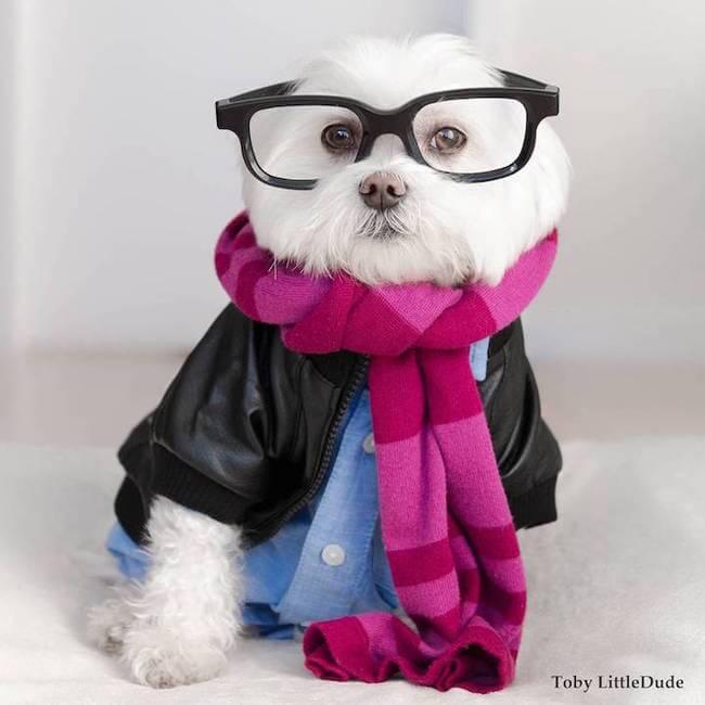 toby hipstesr dog 10