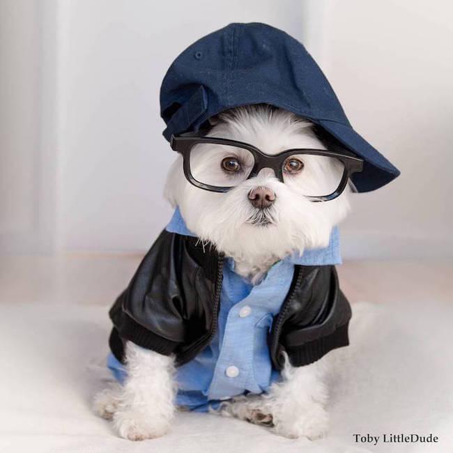 hipster dog 6