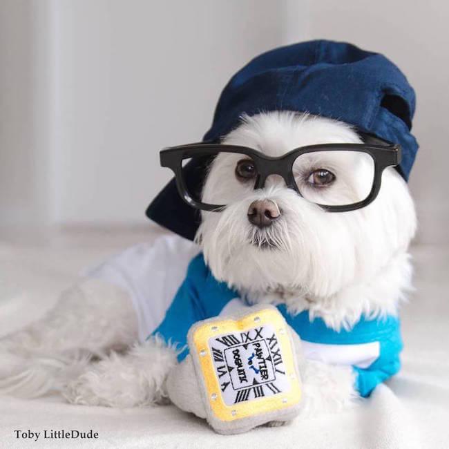 hipster dog 7