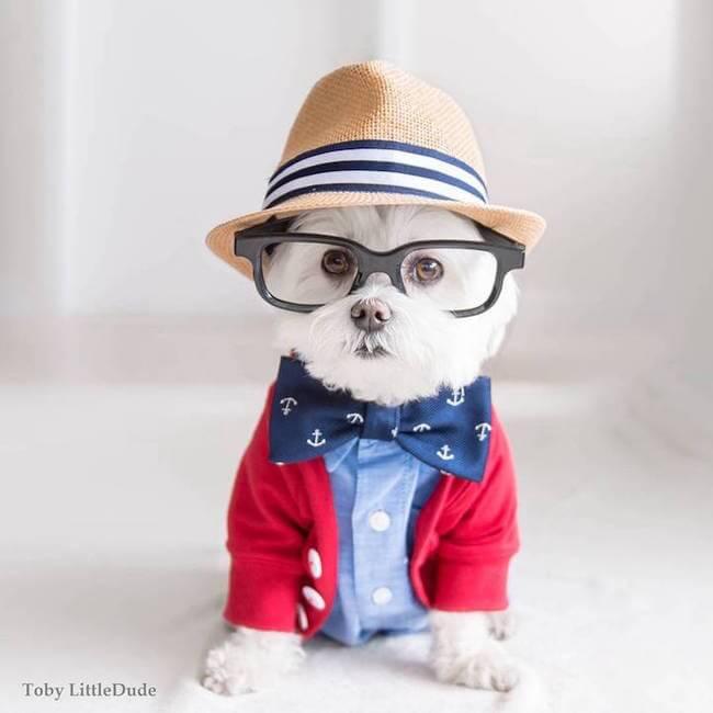 hipster dog 2
