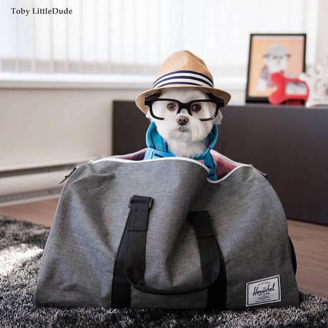 hipster dog 14