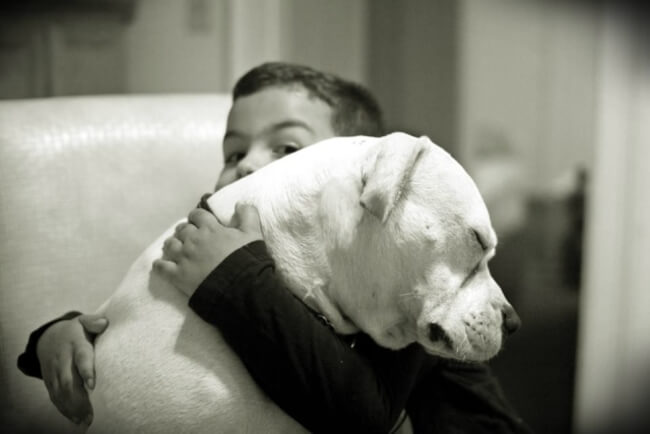 Dog And Boy 8