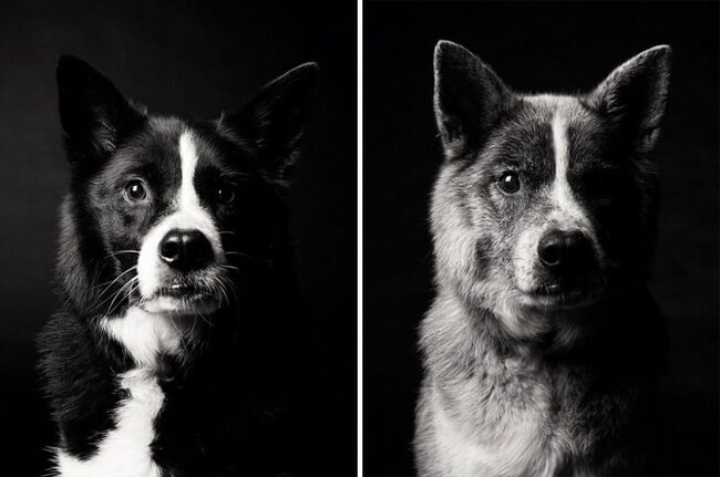 dogs get older photos 10