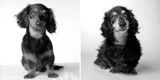 dogs get older photos 12