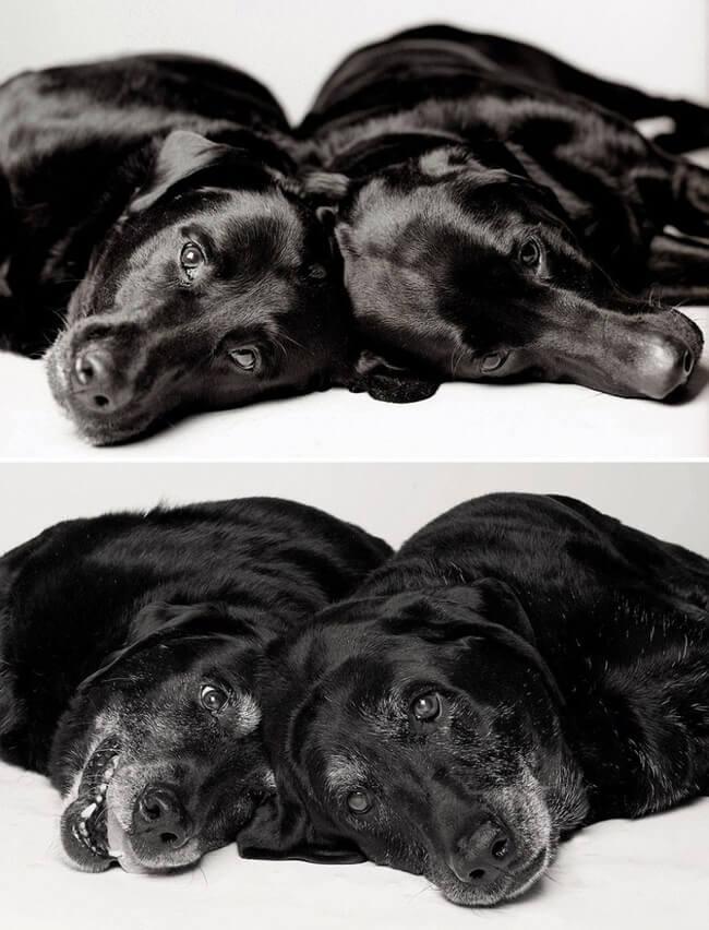 How Dogs Get Older 13