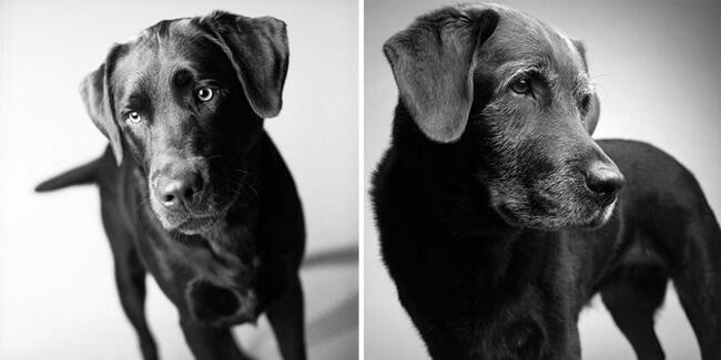 How Dogs Get Older 1