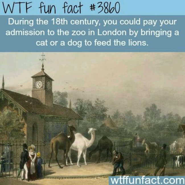 real fun facts 24