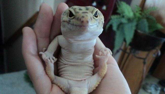 wierd lizards 1