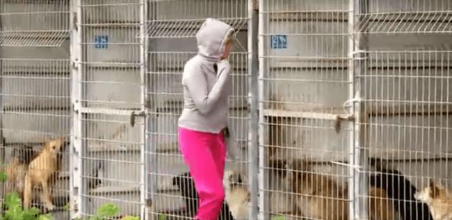 woman buying dog shelter 1