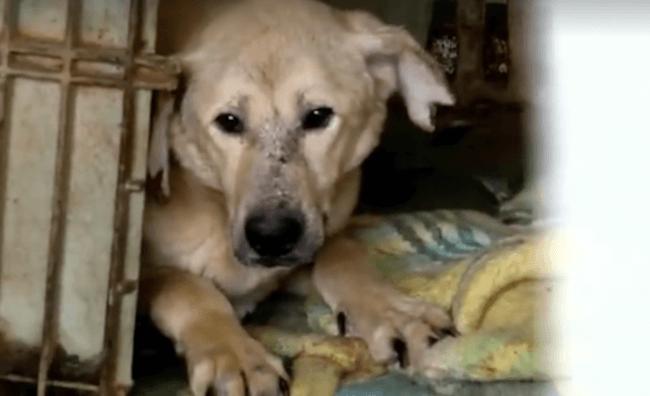 woman buying dog shelter 3