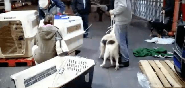 woman buying dog shelter 7