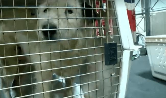 woman buying dog shelter 9