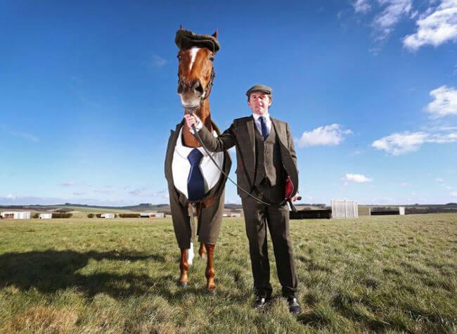 suit horse 1