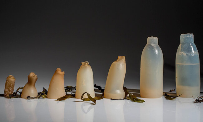 Biodegradable Algae Water Bottles 1
