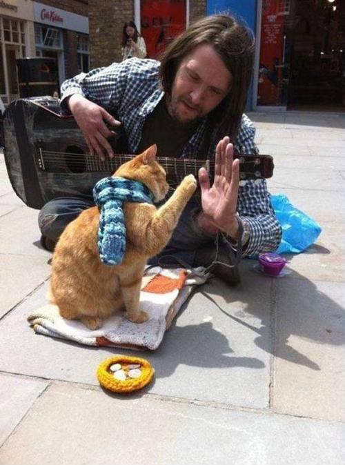 bob cat 2