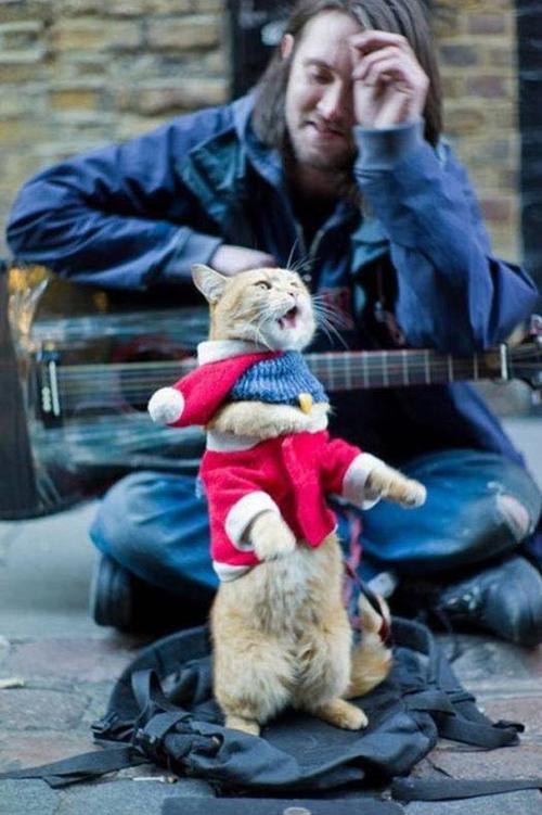 bob cat 3
