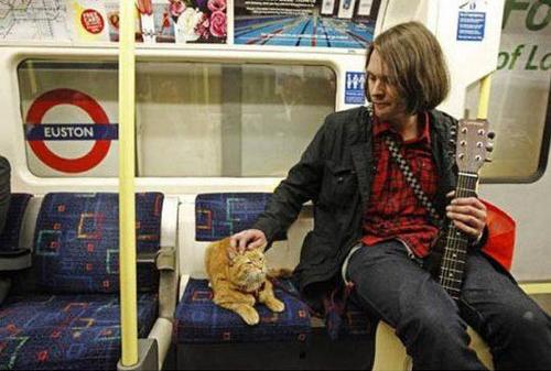 bob the cat 6