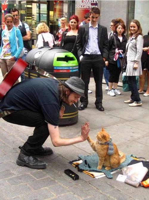 bob the cat 7