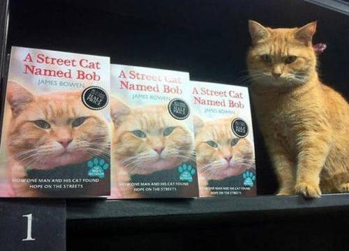 bob cat 9