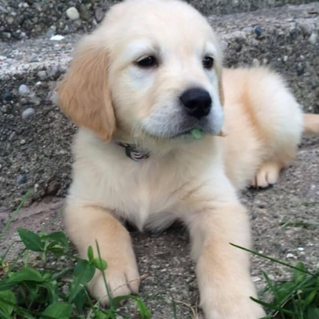 Puppy Braces 3