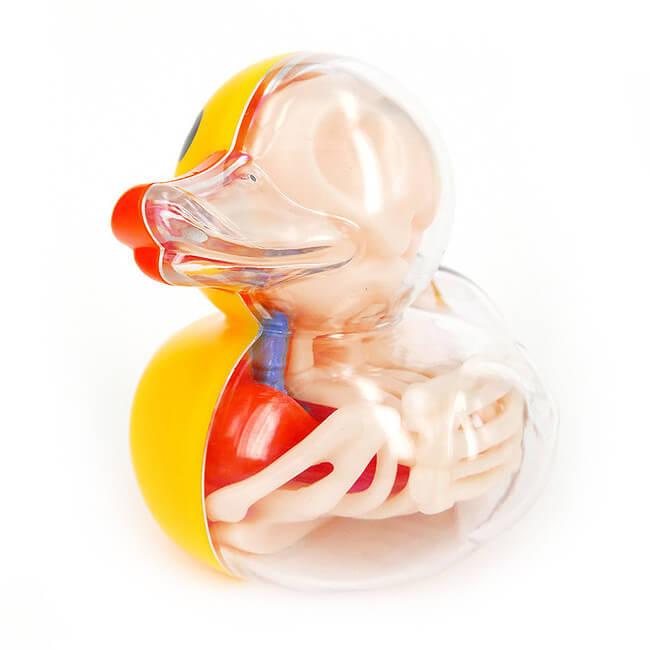 Anatomical Balloon duck 4