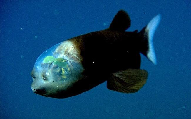 see through fish 2