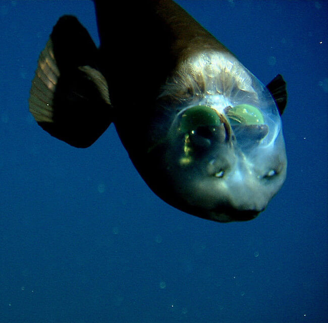 see through fish 3