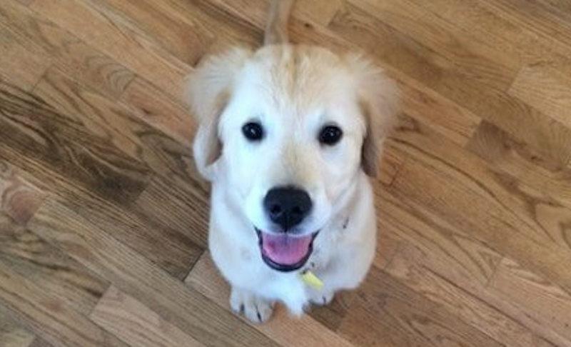 puppy braces