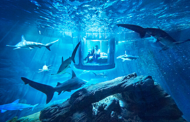 Paris Aquarium Lets Guests Sleep in Submerged Glass Room Surrounded by 35 Sharks 1